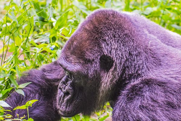 Visit To The Atlanta Zoo - 6-29-17