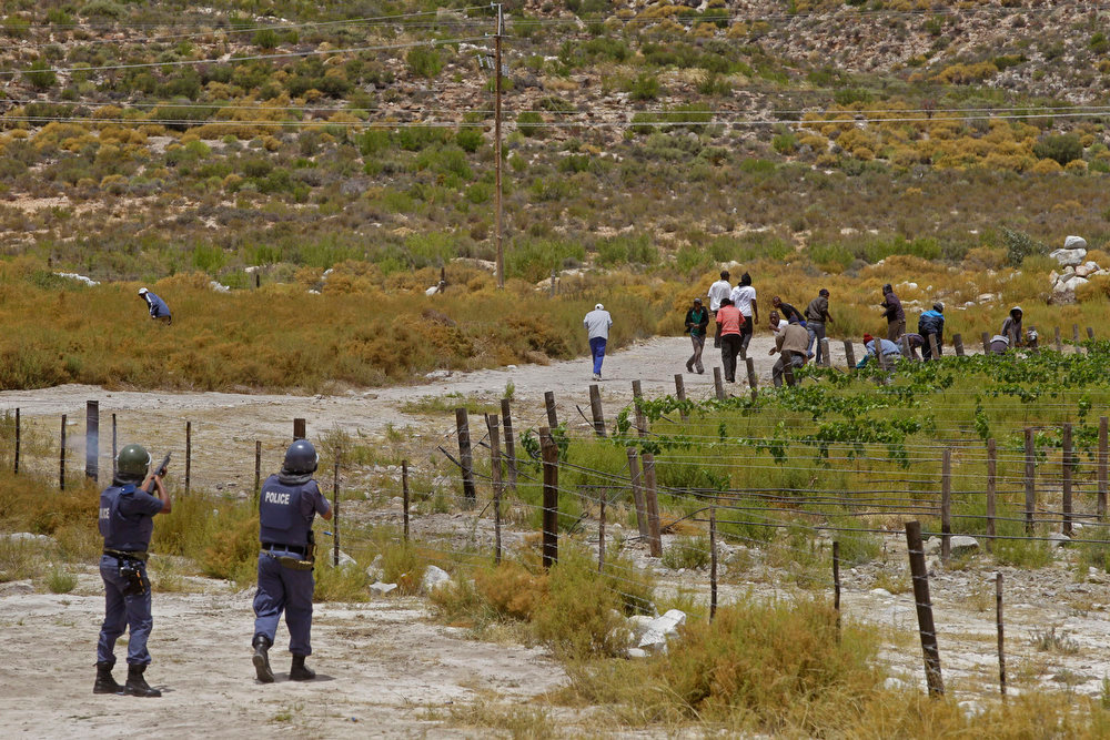 . South African police, left,  fire robber bullets at the farm workers, as they run into farm whine land during their demonstration in De Doorns , South Africa, Thursday, Jan 10, 2013. Striking farm workers in South Africa have clashed with police for a second day during protests for higher wages. The South African Press Association says police on Thursday fired rubber bullets at rock-throwing demonstrators in the town of De Doorns in Western Cape province, and protests were occurring in at least two other towns. (AP Photo/Schalk van Zuydam)