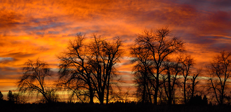 Panoramic sunset of silhouetted trees