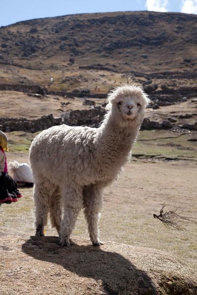 Peru_073.jpg