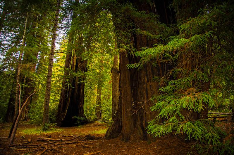 Redwood-20.jpg