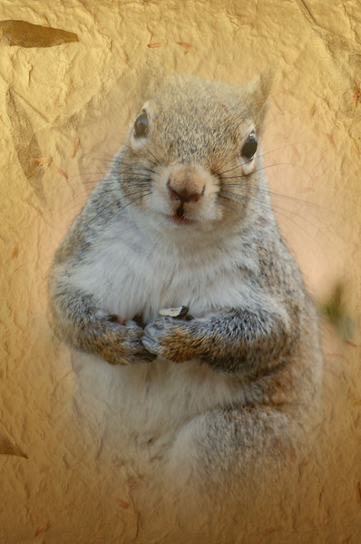 squirrel staring eating sunflower seeds_edited-1.jpg