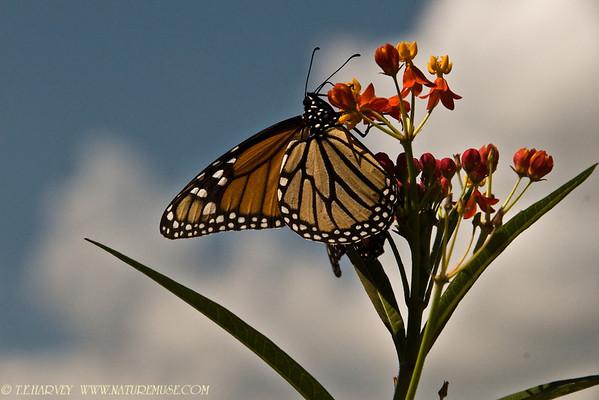Butterflies, Moths, Bees