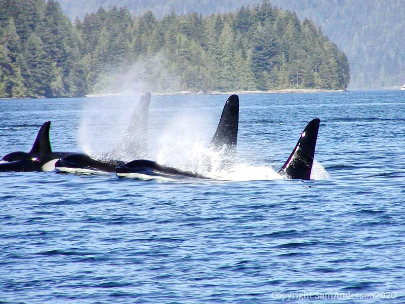 Whales, day 4 (xx)091520.jpg
