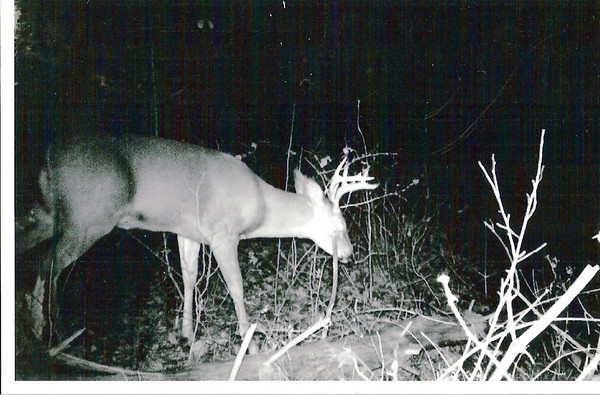 Deer Video 2000-2011