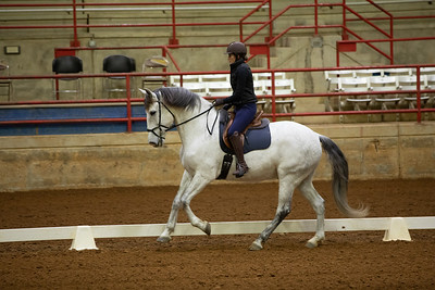Horse 198
