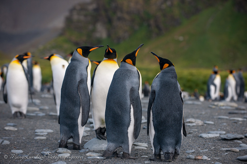 Antarctic-96