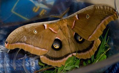 Moths, butterflies and caterpiller