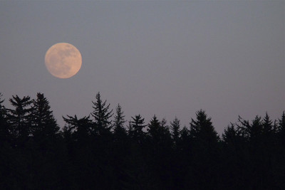 Almost Super Moon (the night before) March 2011, Cynthia Meyer, Tenakee Springs, Alaska