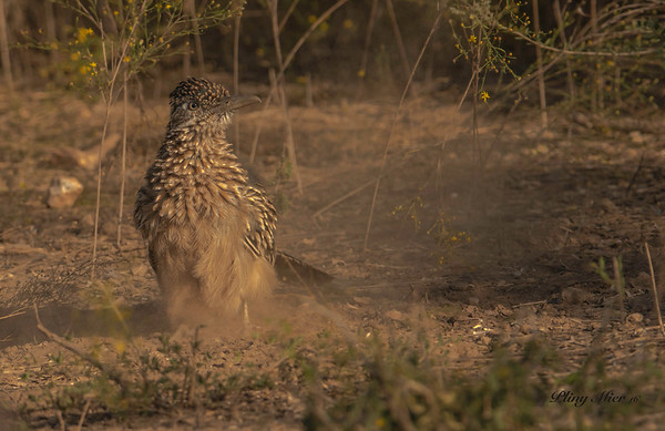 Roadrunner dust_DWL8481.jpg