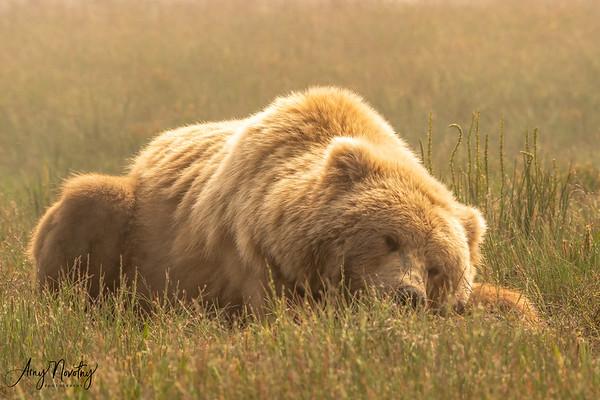Alaska Grizzlies