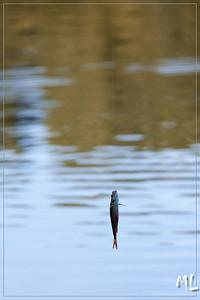 Visfeest Fam. Van Londersele 2012