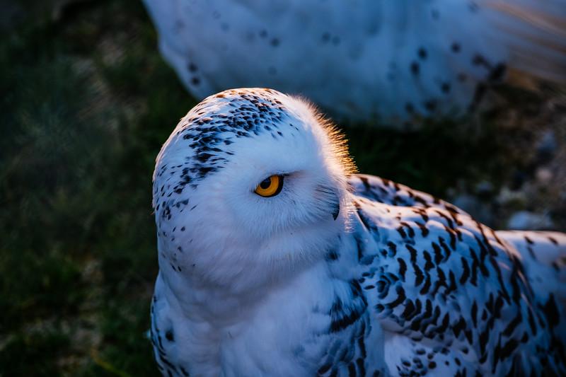 Tonis Zoo-0395.jpg