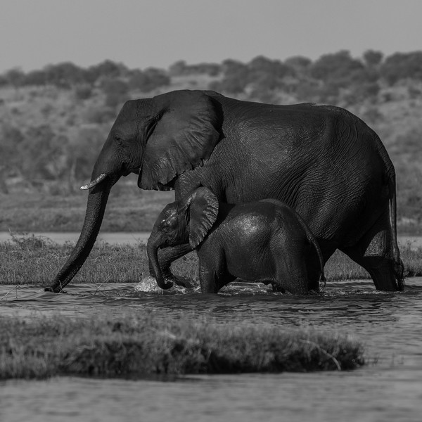 Botswana_June_2017 (5894 of 6179).jpg