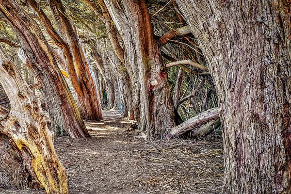 Sea Ranch Trees