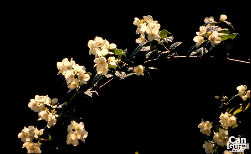 b__DSC1594_flower.jpg