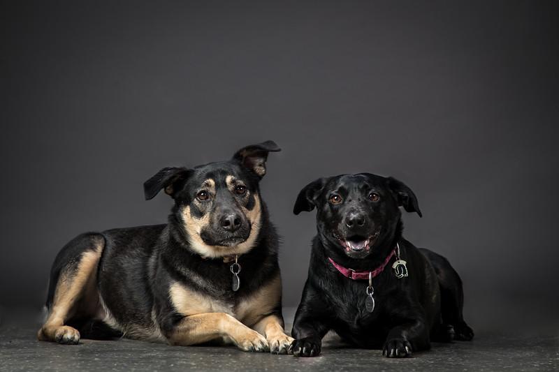 19_0712_dogs_ww--9.jpg