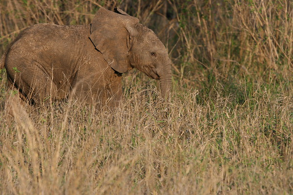 Elephant South Africa 2004 2007