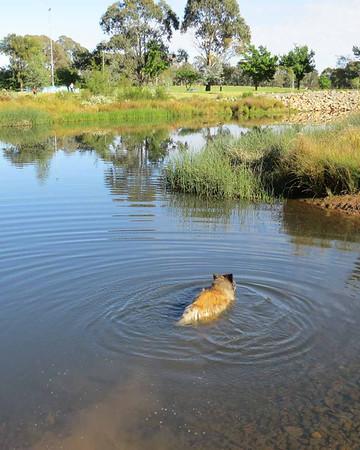 Dickson Wetlands 23 Nov 2013