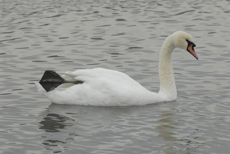 070903 8340 Canada - Victoria - Fort Rodd Hill and Canada geese _F _E ~E ~L.JPG