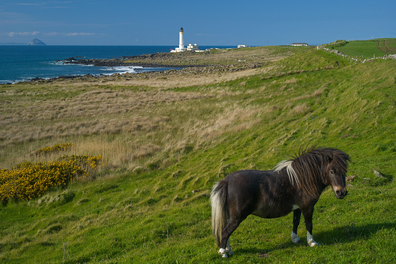 Shetland pony & Corsewall Lighthouse.jpg