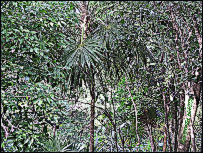 Jungle Love  ©2009 FlorieGray