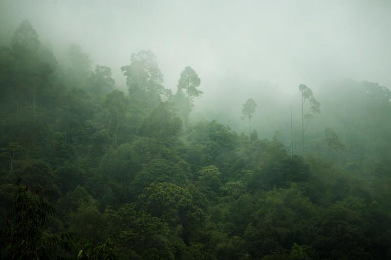 Primary rainforest at the Sumatra Wildlife Sanctuary