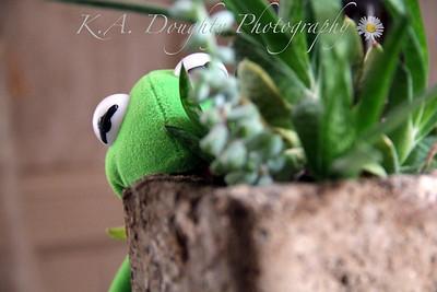 Kermit Kronicles