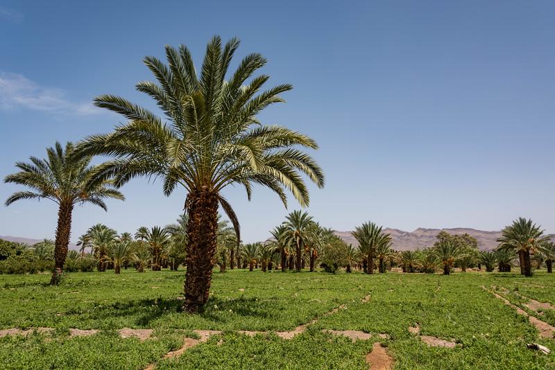 Marruecos-_MM11747.jpg