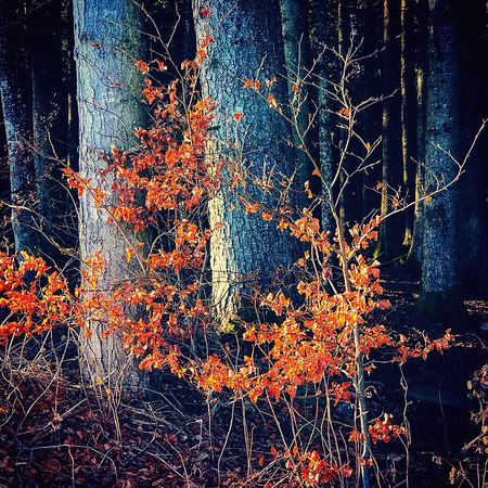 Nature | Naturfotografie
