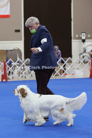CSCA Regional Specialty Dogs - Dogs American Bred