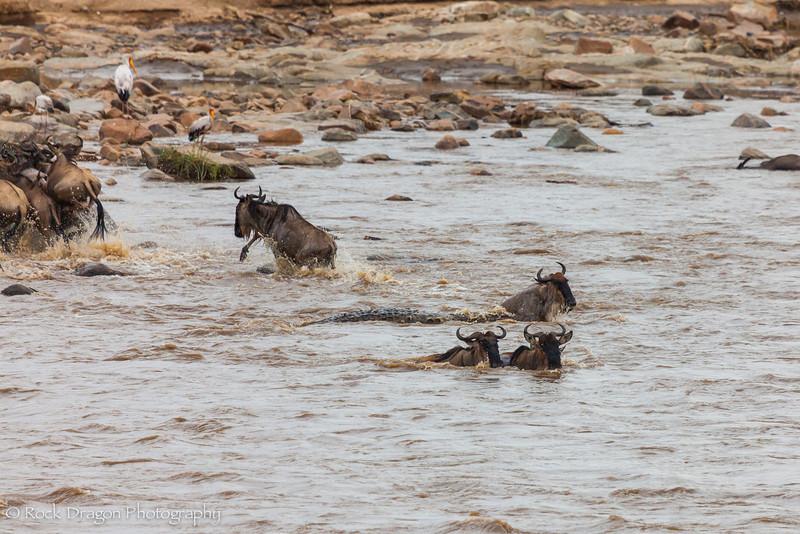 North_Serengeti-47.jpg