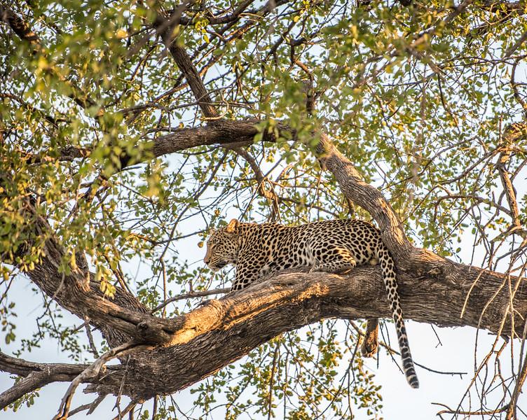 Botswana_June_2017 (3614 of 6179).jpg