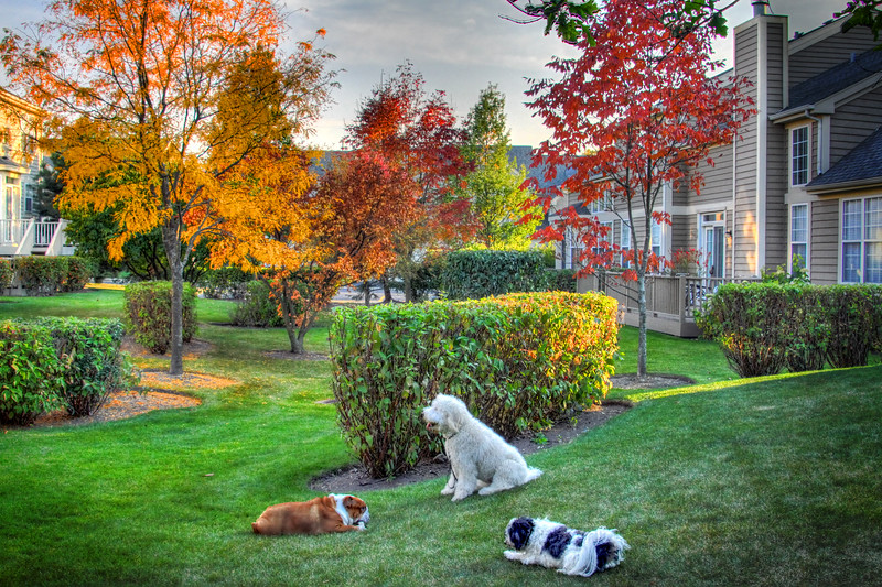 Dogs Backyard.jpg