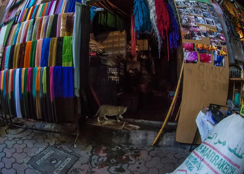 MarrakeshColoredCloths&CatDSC_9143.jpg
