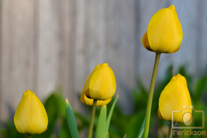 April Flowers Spring 2014