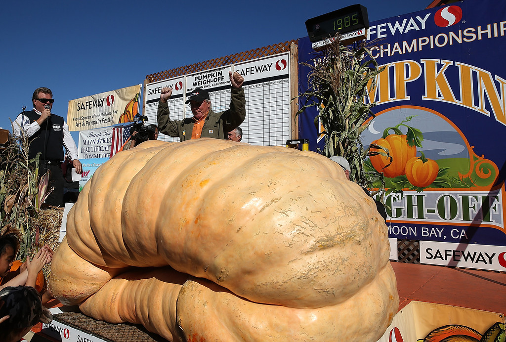 . Gary Miller (R) of Napa, California celebrates after winning the 40th Annual Safeway World Championship Pumpkin Weigh-Off on October 14, 2013 in Half Moon Bay, California. Gary Miller\'s gigantic pumpkin weighed in at 1,985 pounds to win the 40th Annual Safeway World Championship Pumpkin Weigh-Off. Miller took home a cash prize of $11,910, or $6.00 a pound.  (Photo by Justin Sullivan/Getty Images)