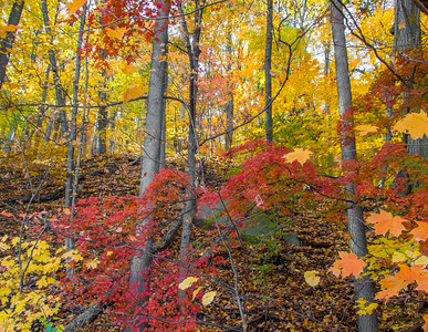 Fall in the Palisades Interstate SP - Nov 2016