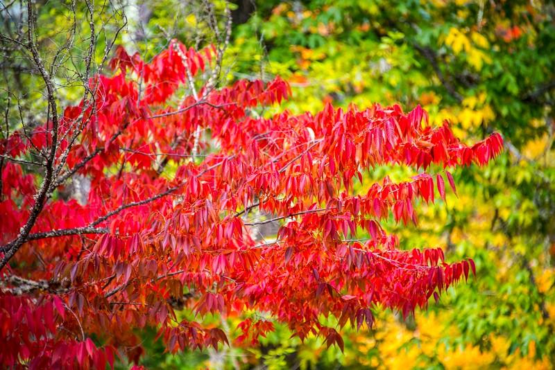 Ashland_Fall Colors-4.jpg