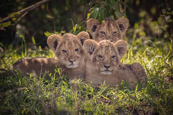 Africa 2017 Serengeti and Mara Plains
