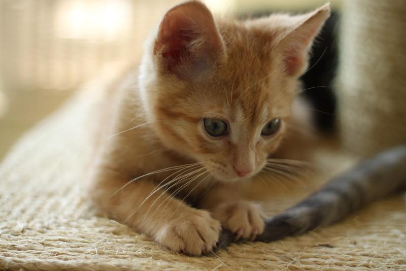 Kittens - Egghead.JPG