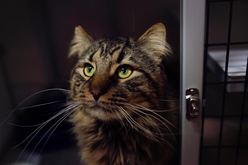 costner dark SAFE Haven for Cats March 19-03_19_14-164.jpg