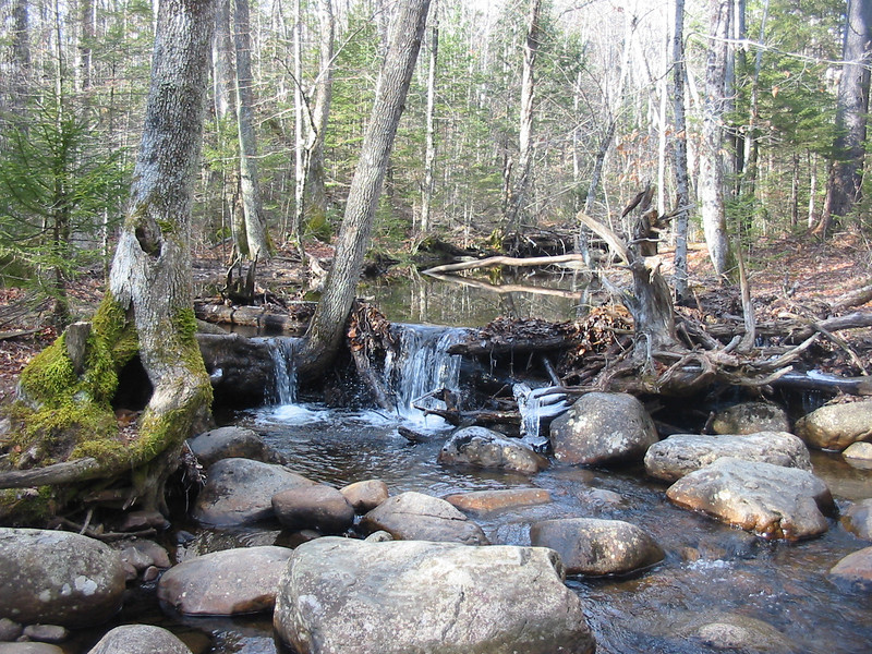 Brook on Franconia Brook Trail.JPG