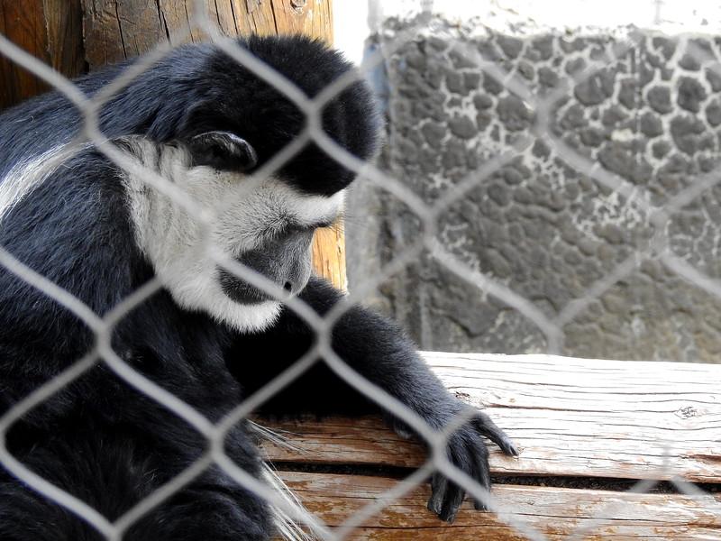 Cheyenne Mtn Zoo 2019 (1133).JPG