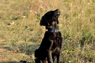 FORD Dog
