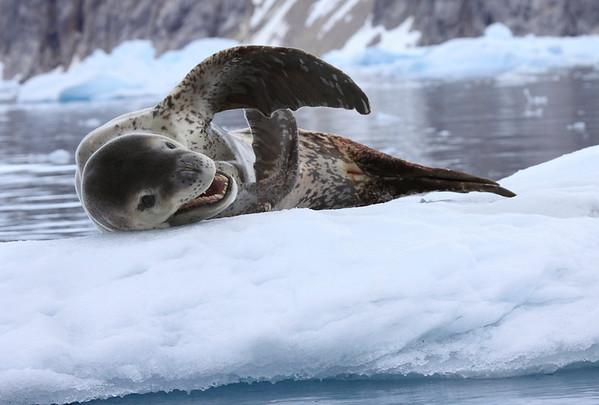 Antarctic South Georgia Falklands 2005 2009 2015