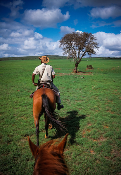 Guide leads horseback safari in Addo Elephant National Park.