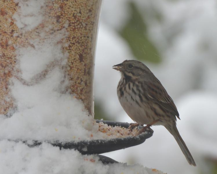 Finch on feeder.jpg