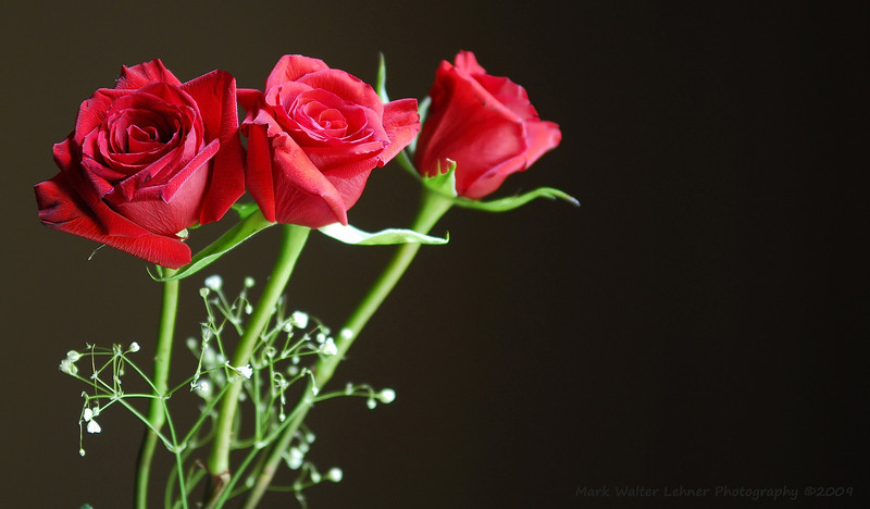 Three Roses Were Bought ...