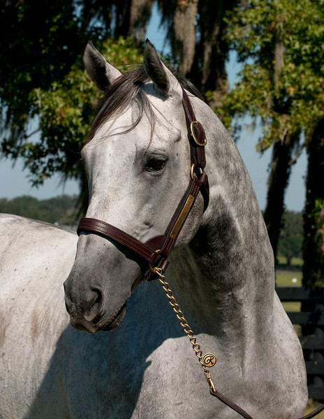 Unbridled Time at Signature Stallions